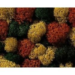 Busta licheni misto autunno