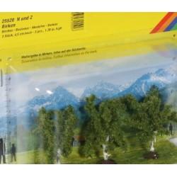 3 alberi betulla 45 mm