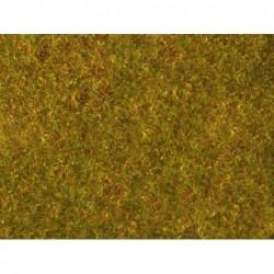 Foliage giallo verde...